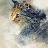 Cat Aquarelle