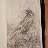 Pencil sketch of a Raven
