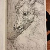 Horse portrait – Sketchbook Portrait