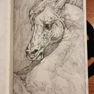 Horse portrait – Sketchbook Portrait