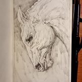 Horse stallion portrait – Sketchbook Portrait