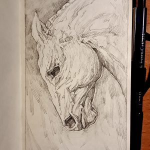 Horse stallion portrait – Sketchbook Portrait